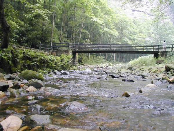 Golden Whip Stream, Zhangjiajie National Forest Park