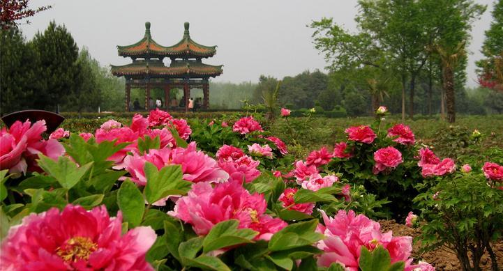 trip to China in spring