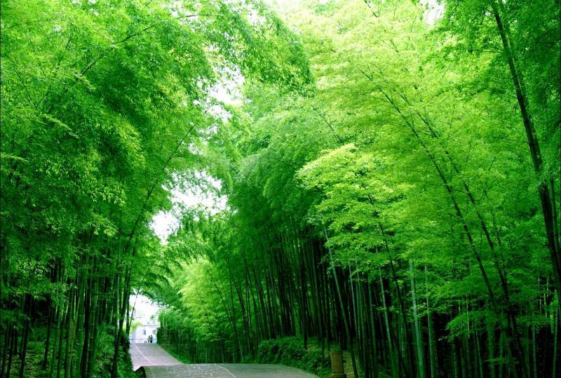 Shunan Bamboo-Sea