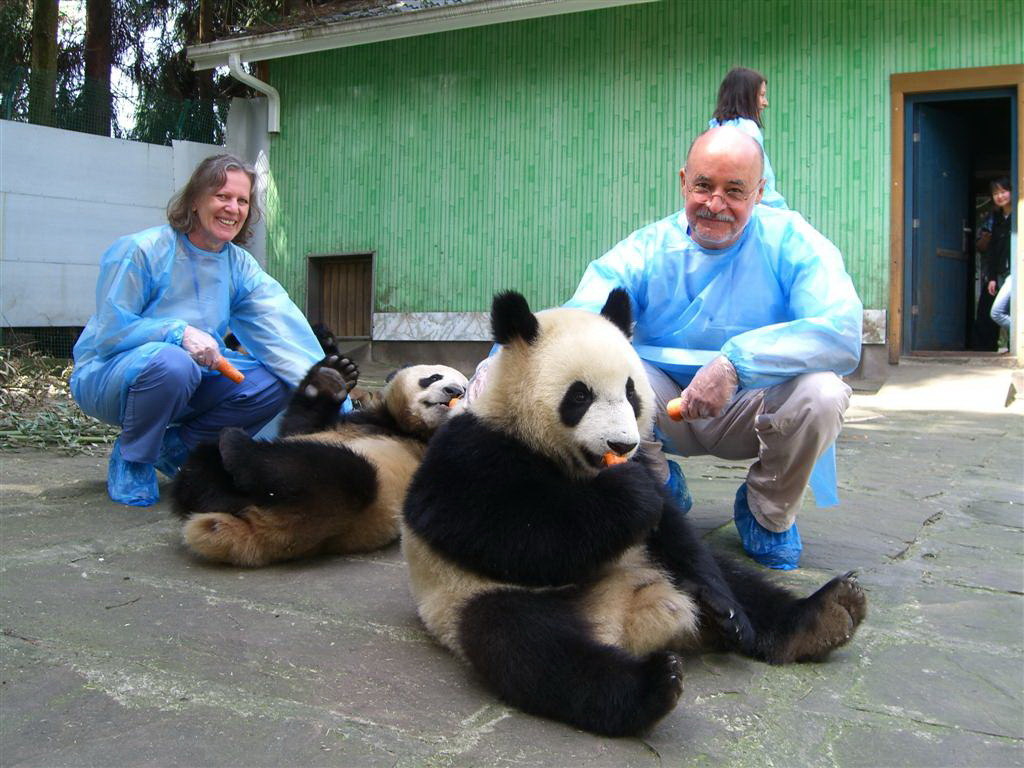 Be a Panda Volunteer