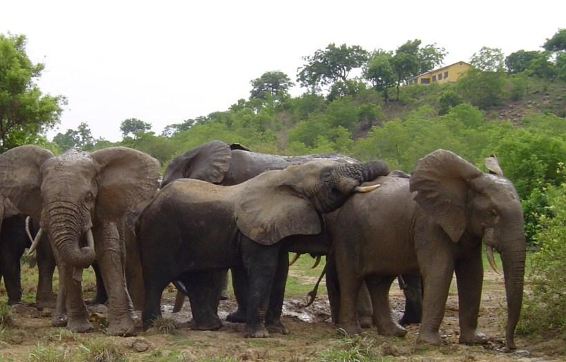 Ghana Wildlife, Biodiversity, Conservation, Sanctuaries