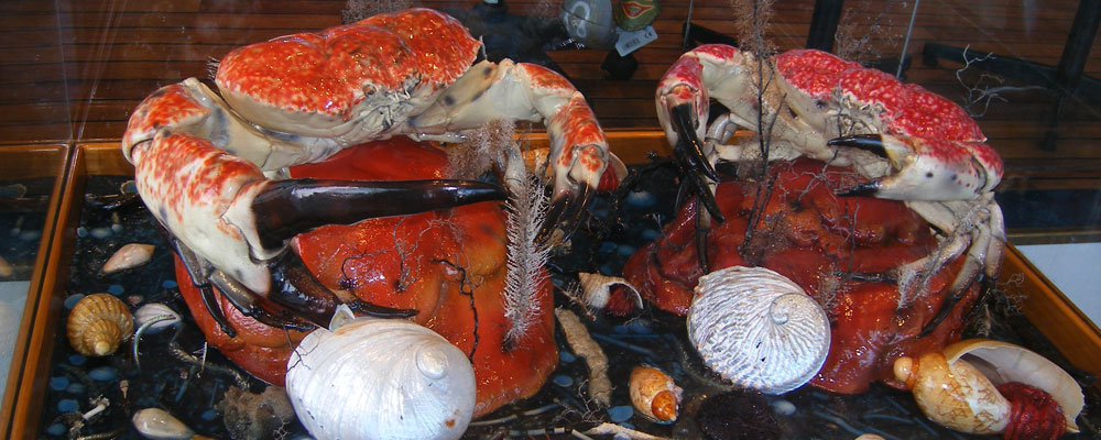 Hobart's Seafood Delights