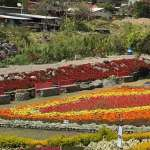 Flower Gardens at Boquete