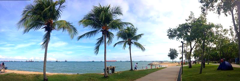 Coconut Trees near the sea