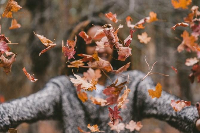 Bild Herbst