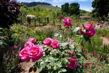 keurbos elgin open gardens sonia cabano blog eatdrinkcapetown