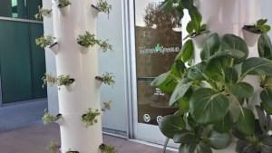 tender greens hydroponics