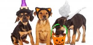 Dog_Halloween_EatDrinkla