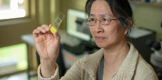 Professor Li Liu