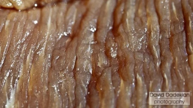 Muscle fibers in brined, uncooked brisket