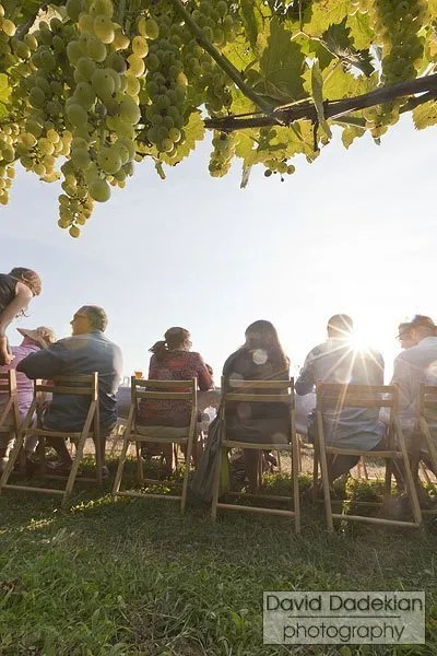 Guests through the grapes