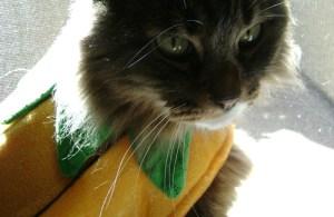 Emeril in his pumpkin costume