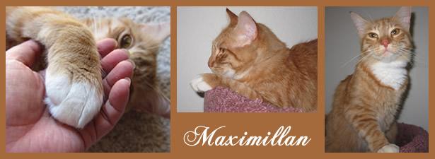 photo montage of Max