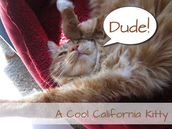 A Cool California Kitty