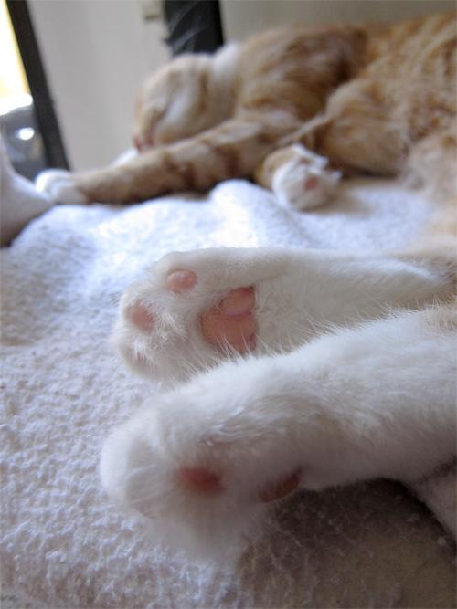 Max sleeping #cats #sleepingcats