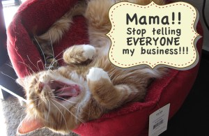 """Max yelling, """"Mama!! Stop telling everyone my business!"""""""