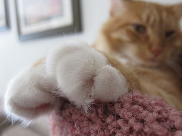 Max's Mitts of Doom