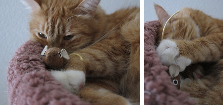 Max playing with his stuffed mice