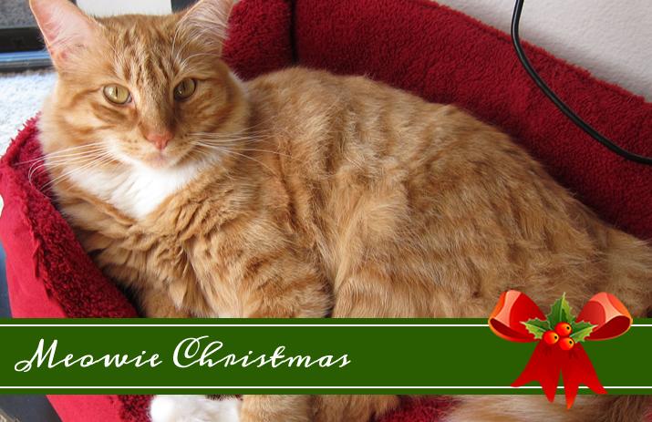 Meowie Christmas: Max's Christmas Wishlist | www.eatlaughpurr.com