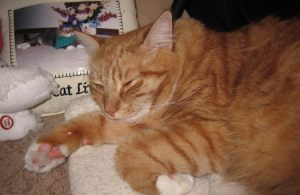 Max Mondays: Things That Make Me Meow