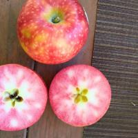 What are Lucy Rose Apples?