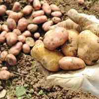 Potatoes in Peru - From the Andes to Mars