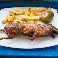 Eating cuy: guinea pig, a Peruvian delicacy.