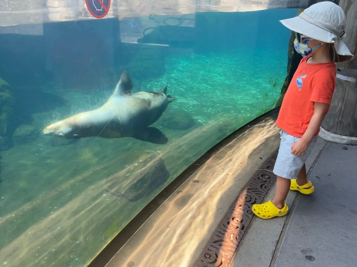 seal swims by boy