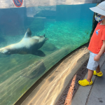 Boy looking at seal