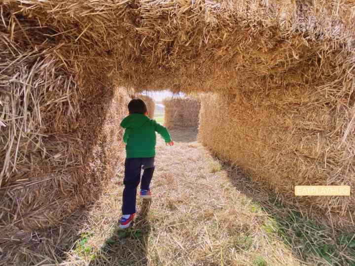 Running through a hay maze