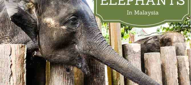 Bonding with Elephants at Malaysia's Elephant Rescue and Rehabilitation Centre