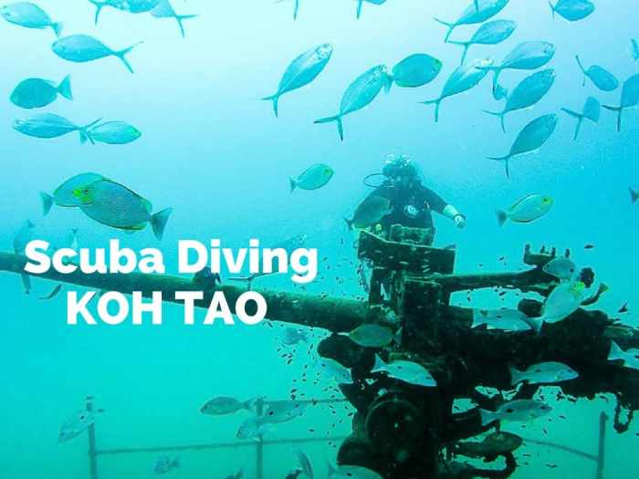 Scuba diving in Koh Tao