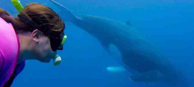 Swimming with Whales in Tonga: Everything You Need to Know
