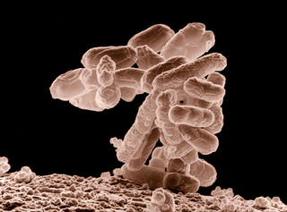microscopic image of e-coli