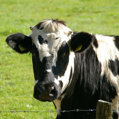 Ask the RD: Is Organic Beef and Milk Healthier than Conventional?
