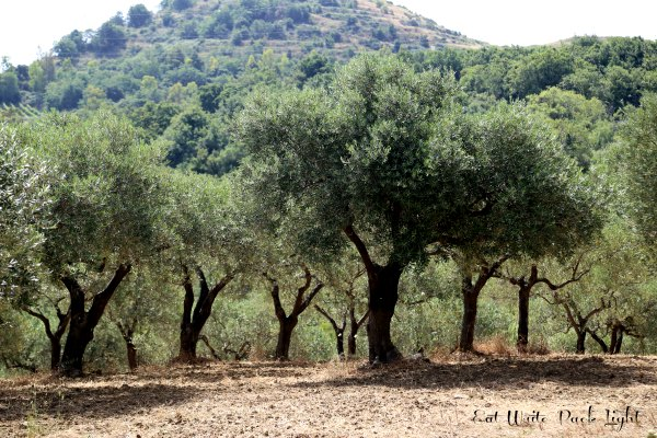 Sicilian Olive Groves