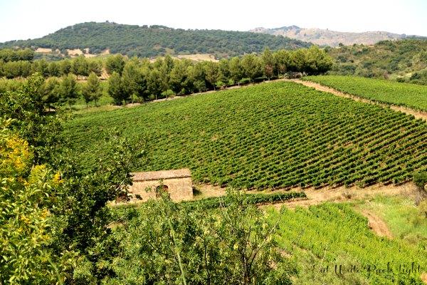 Sicilian Vineyard2