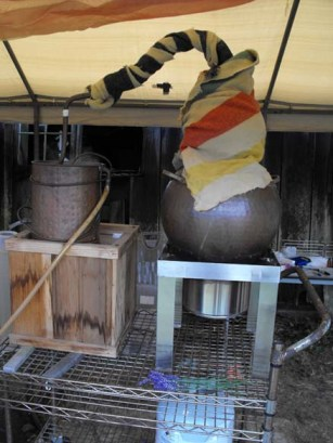 lavender being distilled in Washington