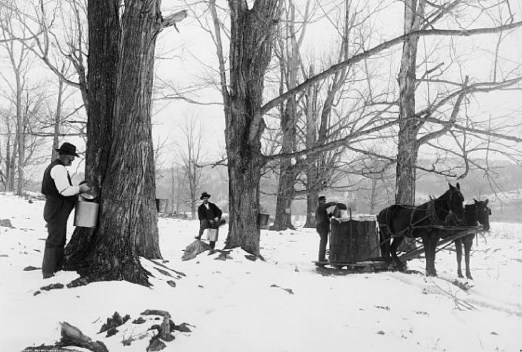 1906 Maple Syrup