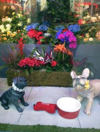 Macy's Flower Show 2016