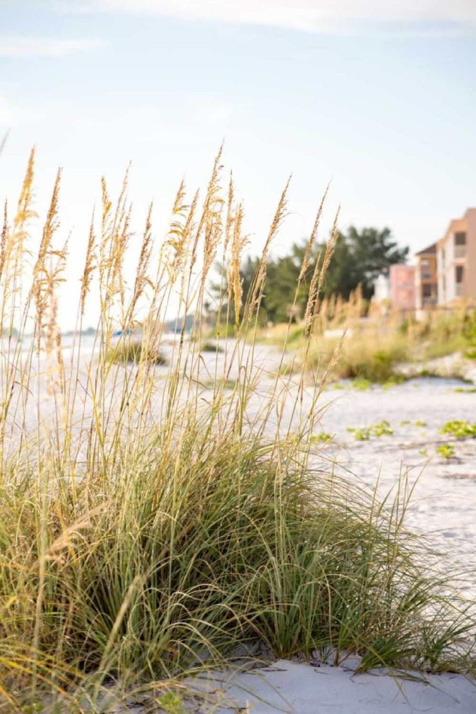 beach-reeds