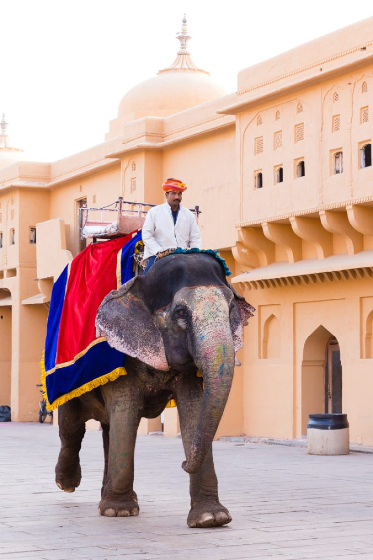 Riding an elephant in Jaipur