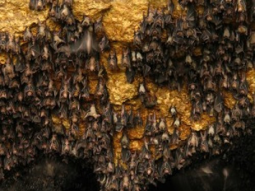Monfort Bat Colony