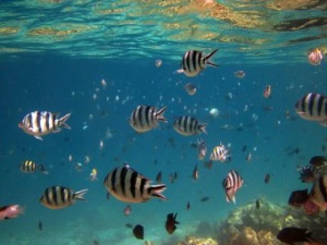 Coral Reef at Shimizu Island