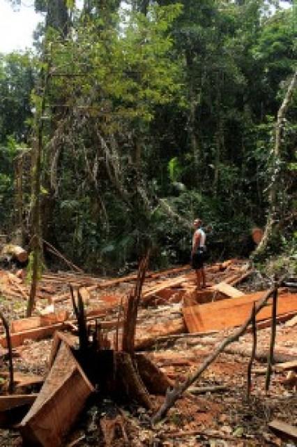 Illegal Logging in Longog Wildlife Sanctuary