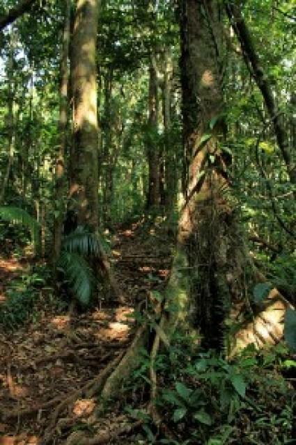 Longong Wildlife Sanctuary