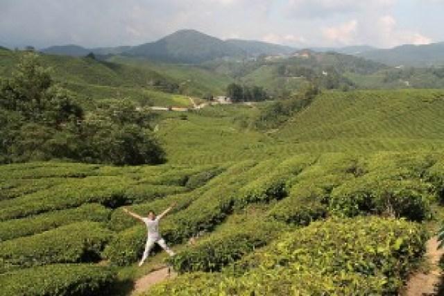 BOH Tea Garden