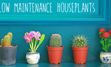3 Low Maintenance Houseplants