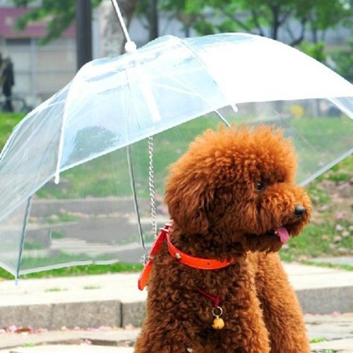 umbrella_leash