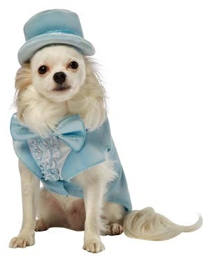 Dumb And Dumber Harry Dunne Dog Costume, $23.86